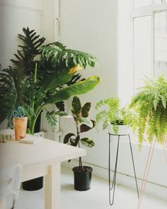 Indoor Green | Old Faithful Shop