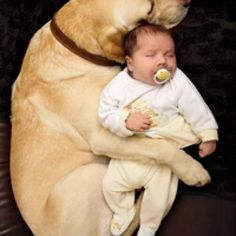Tips on introducing your dog to a new baby | Fit Pregnancy.