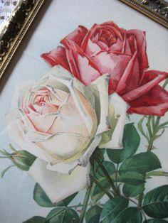 c1890s ROSES Print Paul de Longpre Chromolithograph American Beauty Rose Flower, for sale now at www.rubylane.com/shop/victorianroseprints