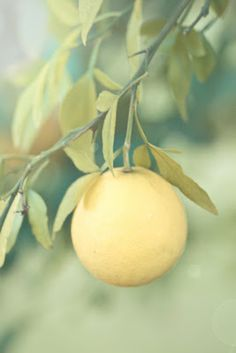 dreamy, soft tones of yellow from behind the camera and dreaming. (beautiful blog too)