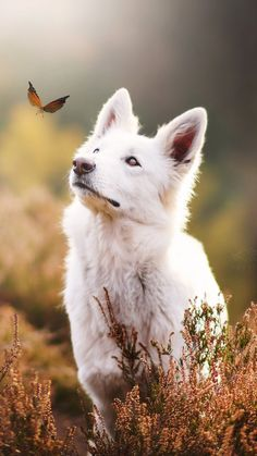 Beautiful Dogs, Animals Beautiful, Cute Animals, Beautiful Dog Pictures, Animals Dog, Jungle Animals, Forest Animals, Photos With Dog, Family Photos