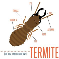 Do you know about termites? Learn more about  termites and how to get rid of them with a home warranty.