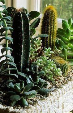 A combination of cacti and succulents.
