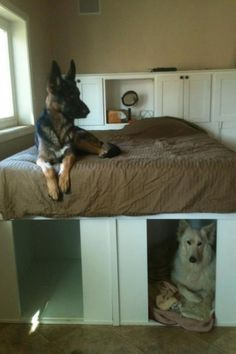 Dogs Cool Finds on Pinterest Dog furniture Dog beds and Dog