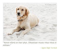 """""""Koiran elämä on liian lyhyt. Oikeastaan muuta vikaa nissä ei olekaan."""" #koira #koirat #dogs #aforismi #sananlasku"""