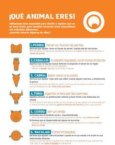 ¡Qué animal eres! Aprender expresiones en español donde los animales son los protagonistas.