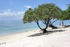 "LIVING TRAVEL - MALAYSIA - Sabah - Selingan - ""Turtle Island"""