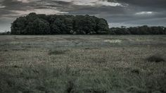 The last one Last One, Vineyard, Country Roads, Abstract, Outdoor, Life, Image, Summary, Outdoors