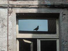 """il riflesso del piccione - oggi era una giornata da foto, ma solo durante l'orario lavorativo, così ho scattato qualcosa """"en passant"""" con la compatta.  Non potevo resistere a tutta quella luce!"""