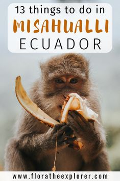 Explore the Amazon jungle from the tiny town of Misahualli, Ecuador – meet monkeys, harvest bananas, climb 1000-year-old trees and much more!