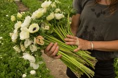 www.floramama.ca l  photo:Stéphane Cocke Celery, Nature, Vegetables, Most Beautiful Flowers, June, Vegetable Recipes, The Great Outdoors, Mother Nature, Scenery