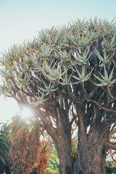 Plants in Matjiesfontein