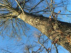 春を待つ樹木