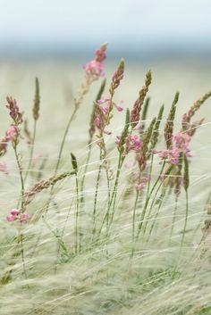 Where wild things grow outdoors nature flowers grass