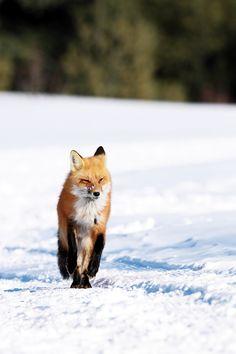 The Long Road by mlorenz #animals #animal #pet #pets #animales #animallovers #photooftheday #amazing #picoftheday