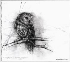 Northern Saw Whet Owl April Coppini Owl Art, Bird Art, Bird Drawings, Animal Drawings, Charcoal Art, Charcoal Drawing, Owl Pictures, Wildlife Art, British Wildlife