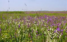 midwest wild flowers images - Google Search