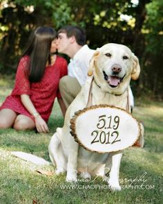 dog + engagement announcement. Sadie would love to be in all of the pictures :)