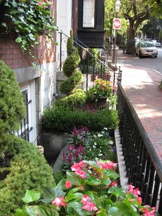 Very lush garden for curbside in front of row home