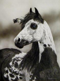 native horse | Tumblr on We Heart It. http://weheartit.com/entry/49483693/via/BarefootChild