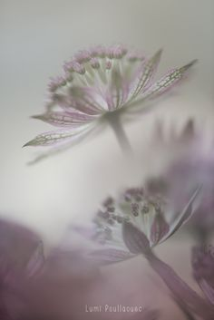 #Macro #DoubleExposition #Fleurs #Photographie