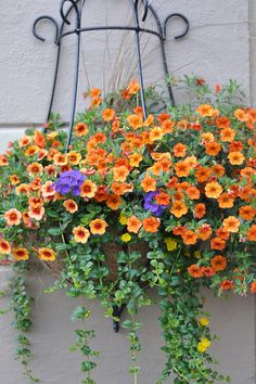 "Pinner says: ""Must have these this year:  Calibrachoa 'Tanerine' Abundant, small petunia-like flowers  Flowers all season  Cascading growth  Low maintenance  Attracts Hummingbirds  Deadheading Not Necessary  Heat Tolerant  Pet Friendly  Semi-Trailing Habit  Excellent in containers, flower beds and hanging baskets"". I agree, they sound perfect for my deck..... so pretty!"