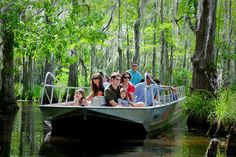 Honey Island Swamp Tour With Transport - New Orleans | Viator