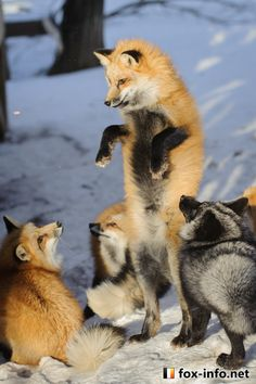 "Everything Fox            - ""Check this out, I can stand like one of those..."