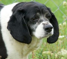 181 Best Dogs Up For Adoption In Nny Images In 2018 Dogs