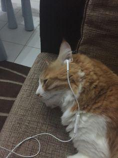 My cat Garfield listening to music. I Love Cats, Cute Cats, Kittens Cutest, Cats And Kittens, Cute Cat Memes, Funny Animals, Cute Animals, Animal 2, Cartoon Pics