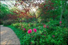 grapevine botanical gardens | City of Grapevine, Texas Botanical Gardens