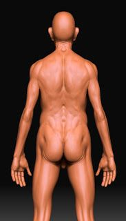 This is a Study Anatomy of a oldman body form
