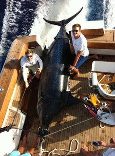 Catching the 5th biggest Blue Marlin in the Atlantic.