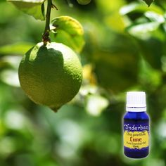 Lime Essential Oil (Citrus aurantifolia) for aromatherapy, skin care and natural perfumes. Tinderbox: supplying pure essential oils since Lime Essential Oil, Pure Essential Oils, Blue Glass Bottles, Citrus Oil, Clary Sage, Oily Skin, Herbalism, Perfume, Skin Care