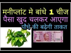 Money plant direction plant benefits and care Sanskrit Quotes, Vedic Mantras, Hindu Mantras, Krishna Mantra, Shri Hanuman, Money Plant, Vastu Shastra, Useful Life Hacks, Tantra