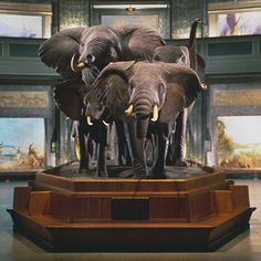 72 best new york museum of natural history images in 2015 new york rh pinterest com