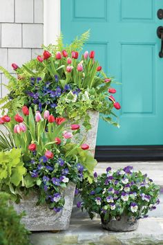 Tulips, Pansies, Acorus, Heuchera, Ivy and Fern. Pair your tulips with Lavender Blue' and 'Purple Wing' Plentifall pansies, acorus, heuchera, variegated ivy, and 'Tiger' fern (a selection of Boston fern).