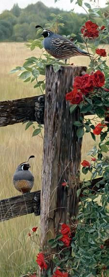 """Quail, Fence and Flowers"""