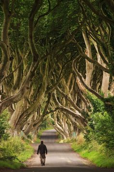 Walking through the Dark Hedges - Northern Ireland (by Bar Artzi) -- I missed this on my trip to Ireland. Good excuse to go back. Oh The Places You'll Go, Places To Travel, Travel Destinations, Dark Places, Cool Places To Visit, Ireland Travel, Ireland Vacation, Ireland Hiking, Vacation List