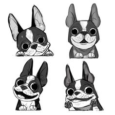 Boston terriers!