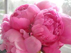 En rosa rosae