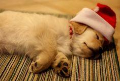 christmas puppy | Tumblr