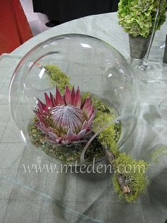 Crosswinds double opening fish bowl with King #protea and moss branch // modern green and pink #wedding #centerpiece #flowers by Keith White for Mt Eden Floral Wholesale