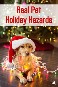 Don't forget to remind your clients of these common and dangerous pet holiday hazards.