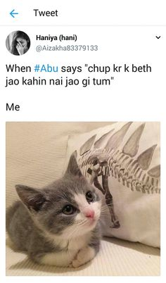 Urdu Funny Quotes, Funny Attitude Quotes, Cute Funny Quotes, Stupid Quotes, Crazy Funny Memes, Funny Relatable Memes, Funny Tweets, Wtf Funny, Hilarious