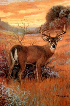 Whitetail Buck Deer Big Antler Rack Sunset Animal Wildlife Wall Picture Art Print: A high-quality home decor wall picture which represents the best of both worlds: quality and affordability. Framed Art Prints, Poster Prints, Deer Pictures, Deer Art, Animal Posters, Animal Paintings, Deer Paintings, Wildlife Art, Canvas Art