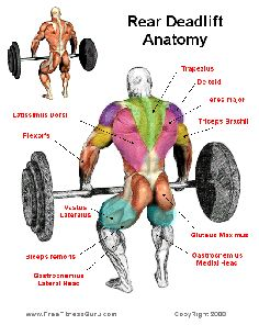 rear deadlift As much as I enjoy doing the deadlift, I end up hurting the lower spinal region of my back on the last rep of the last set like clockwork