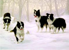 Winter Holiday - Border Collie Charity Christmas Card - John Silver Beautiful!!