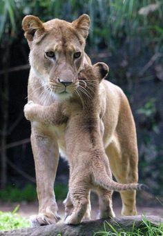 the best hugs + a cute lion roar = my sweet boy. :)