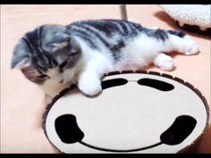 【楽天市場】動くおもちゃ ぐるぐるマウス  電動おもちゃ 猫用品 猫おもちゃ ストレス発散 P11Sep16:ペットセンチュリー